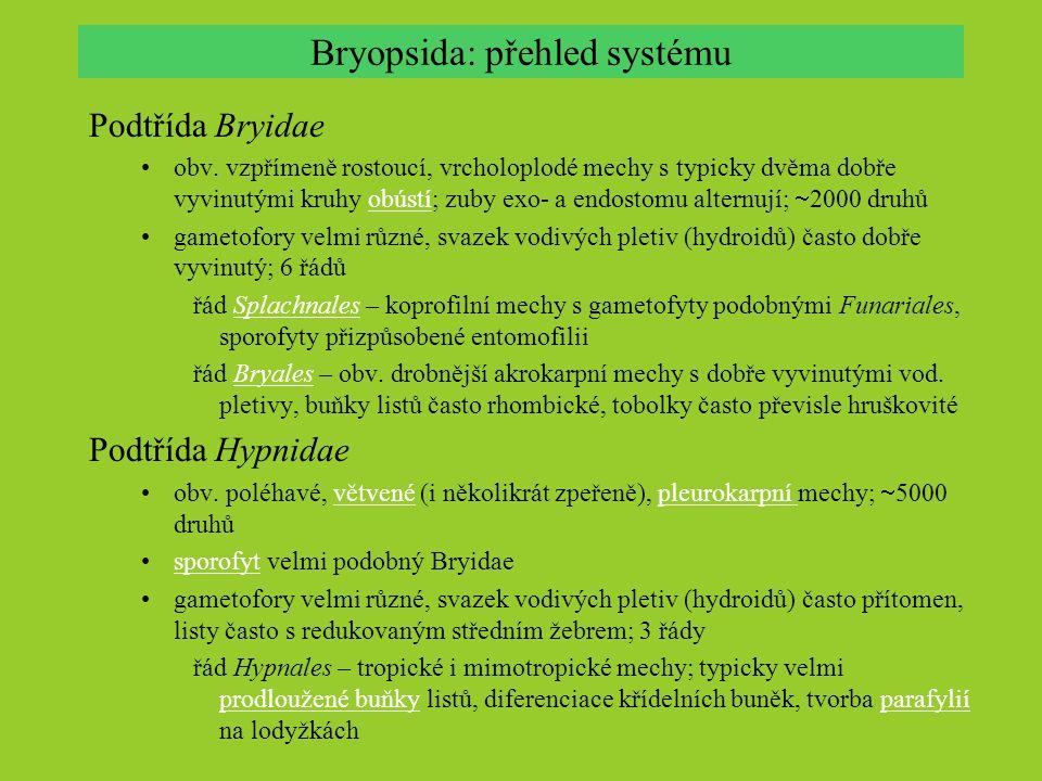 Bryopsida: přehled systému Podtřída Bryidae obv. vzpřímeně rostoucí, vrcholoplodé mechy s typicky dvěma dobře vyvinutými kruhy obústí; zuby exo- a end