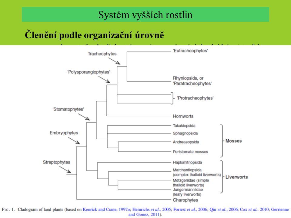 Členění podle organizační úrovně.mechorosty: haplo-diplontní organismy – převažuje haploidní autotrofní gametofyt v životním cyklu, sporofyty s nevětvenými sporangii.