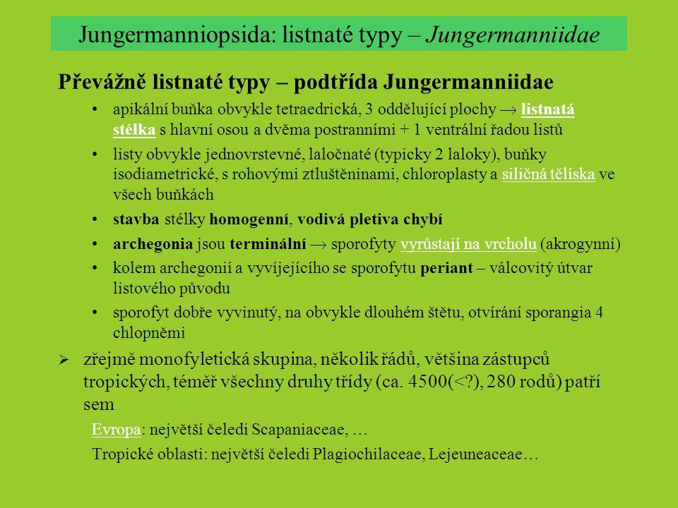 Jungermanniopsida: listnaté typy – Jungermanniidae Převážně listnaté typy – podtřída Jungermanniidae apikální buňka obvykle tetraedrická, 3 oddělující plochy  listnatá stélka s hlavní osou a dvěma postranními + 1 ventrální řadou listůlistnatá stélka listy obvykle jednovrstevné, laločnaté (typicky 2 laloky), buňky isodiametrické, s rohovými ztluštěninami, chloroplasty a siličná tělíska ve všech buňkáchsiličná tělíska stavba stélky homogenní, vodivá pletiva chybí archegonia jsou terminální  sporofyty vyrůstají na vrcholu (akrogynní)vyrůstají na vrcholu kolem archegonií a vyvíjejícího se sporofytu periant – válcovitý útvar listového původu sporofyt dobře vyvinutý, na obvykle dlouhém štětu, otvírání sporangia 4 chlopněmi  zřejmě monofyletická skupina, několik řádů, většina zástupců tropických, téměř všechny druhy třídy (ca.