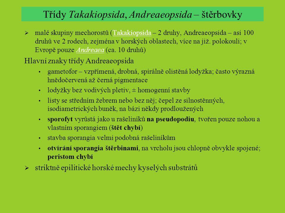 Třídy Takakiopsida, Andreaeopsida – štěrbovky  malé skupiny mechorostů (Takakiopsida – 2 druhy, Andreaeopsida – asi 100 druhů ve 2 rodech, zejména v