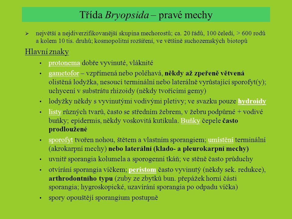 Třída Bryopsida – pravé mechy  největší a nejdiverzifikovanější skupina mechorostů; ca. 20 řádů, 100 čeledí, > 600 rodů a kolem 10 tis. druhů; kosmop