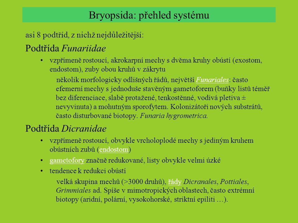 Bryopsida: přehled systému asi 8 podtříd, z nichž nejdůležitější: Podtřída Funariidae vzpřímeně rostoucí, akrokarpní mechy s dvěma kruhy obústí (exost