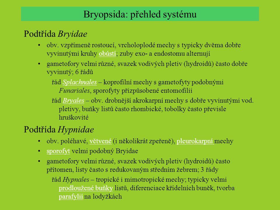 Hlevíky (Anthocerotophyta) izolovaná evoluční linie s nejasným vztahem k ostatním mechorostům a zbytku vyšších rostlin; celosvětově asi 100 – 150 (–300?) druhů v 6 – 12 rodech Hlavní společné znaky stélka lupenitá, dorziventálně zploštělá, růžicovitá nebo pentlicovitárůžicovitápentlicovitá stélka z tenkostěnných buněk a schizogenních slizových dutin; stěny jsou neschopné vytvářet pigmenty anthokyanového typu; buňky neobsahují siličná tělíska, často pouze jeden obří chloroplast v buňce, ten často obsahuje pyrenoidtenkostěnných buněkchloroplast antheridia tvořena endogenně v antheridiálních dutinách; spermatozoidy jsou bilaterálně symetrickéspermatozoidy první dělení zygoty je podélné  bilaterální symetrie embrya a sporofytu sporofyt = válcovité (rohovité) zašpičatělé sporangium bez štětu, noha zanořena do gametoforunoha uvnitř sporofytu střední sloupek (kolumela); mezi výtrusy diferencovány sterilní buňky – pseudoelaterystřední sloupekvýtrusy stěna sporangia mnohovrstevná, často s průduchyprůduchy růst sporofytu obvykle neukončený, pomocí interkalárního meristému dozrávání postupné, od vrcholu; otvírání sporangia 1-2 podélnými liniemi, odshora chybí flavonoidy