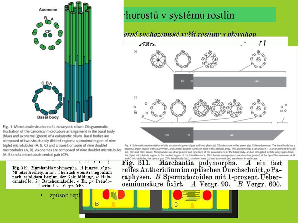 mechorosty – zelené, primárně suchozemské vyšší rostliny s převahou autotrofního gametofytu v životním cyklu, tvořící nevětvená sporangia Mechorosty s