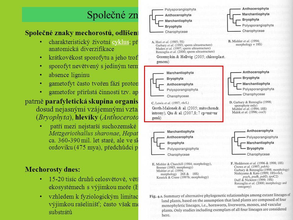 Společné znaky mechorostů, odlišení ostatních vyš. rostlin ( Polysporangiophyta ) charakteristický životní cyklus; převaha gametofytu a jeho morfologi