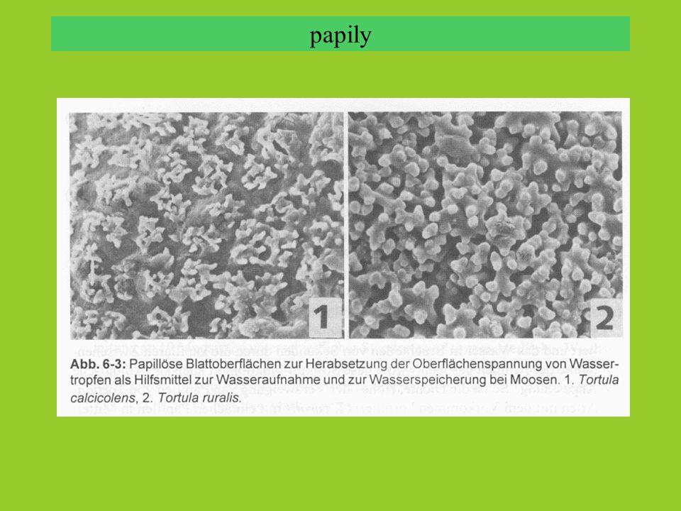 bioindikace - monitoring depozice těžkých kovů