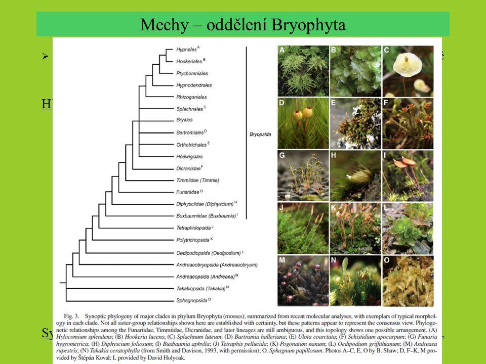 Mechy – oddělení Bryophyta  největší skupina mechorostů s  10 tis. druhy v asi 700 rodech. Nejstarší známé fosílie z permu. Olistěné gametofory obvy