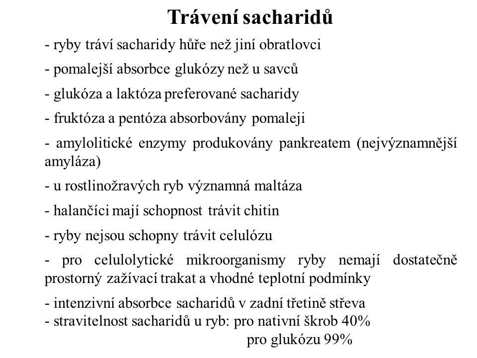 - ryby tráví sacharidy hůře než jiní obratlovci - pomalejší absorbce glukózy než u savců - glukóza a laktóza preferované sacharidy - fruktóza a pentóza absorbovány pomaleji - amylolitické enzymy produkovány pankreatem (nejvýznamnější amyláza) - u rostlinožravých ryb významná maltáza - halančíci mají schopnost trávit chitin - ryby nejsou schopny trávit celulózu - pro celulolytické mikroorganismy ryby nemají dostatečně prostorný zažívací trakat a vhodné teplotní podmínky - intenzivní absorbce sacharidů v zadní třetině střeva - stravitelnost sacharidů u ryb: pro nativní škrob 40% pro glukózu 99% - Trávení sacharidů