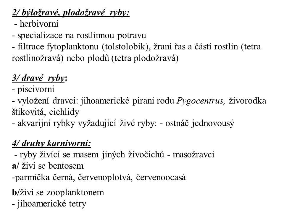 2/ býložravé, plodožravé ryby: - herbivorní - specializace na rostlinnou potravu - filtrace fytoplanktonu (tolstolobik), žraní řas a částí rostlin (tetra rostlinožravá) nebo plodů (tetra plodožravá) 3/ dravé ryby: - piscivorní - vyložení dravci: jihoamerické pirani rodu Pygocentrus, živorodka štikovitá, cichlidy - akvarijní rybky vyžadující živé ryby: - ostnáč jednovousý 4/ druhy karnivorní: - ryby živící se masem jiných živočichů - masožravci a/ živí se bentosem -parmička černá, červenoplotvá, červenoocasá b/živí se zooplanktonem - jihoamerické tetry
