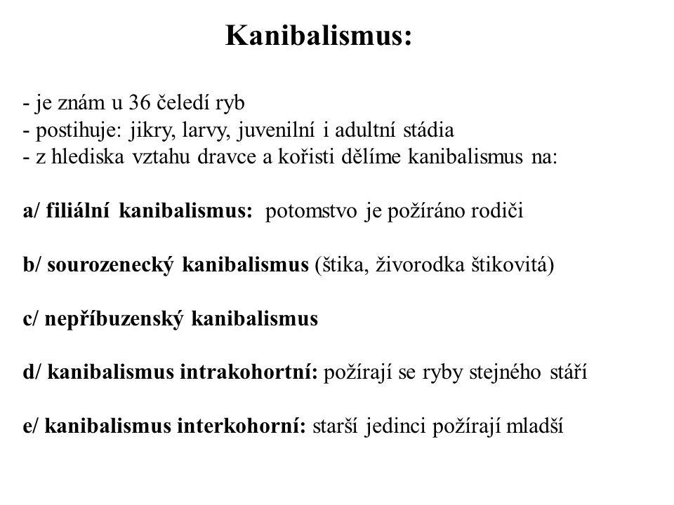 Kanibalismus: - je znám u 36 čeledí ryb - postihuje: jikry, larvy, juvenilní i adultní stádia - z hlediska vztahu dravce a kořisti dělíme kanibalismus na: a/ filiální kanibalismus: potomstvo je požíráno rodiči b/ sourozenecký kanibalismus (štika, živorodka štikovitá) c/ nepříbuzenský kanibalismus d/ kanibalismus intrakohortní: požírají se ryby stejného stáří e/ kanibalismus interkohorní: starší jedinci požírají mladší