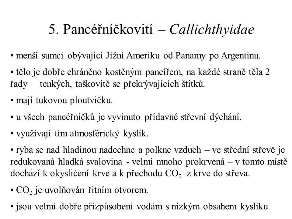 5. Pancéřníčkovití – Callichthyidae menší sumci obývající Jižní Ameriku od Panamy po Argentinu. tělo je dobře chráněno kostěným pancířem, na každé str