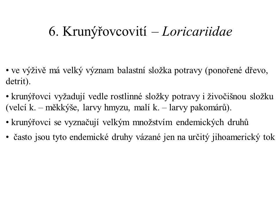 6. Krunýřovcovití – Loricariidae ve výživě má velký význam balastní složka potravy (ponořené dřevo, detrit). krunýřovci vyžadují vedle rostlinné složk