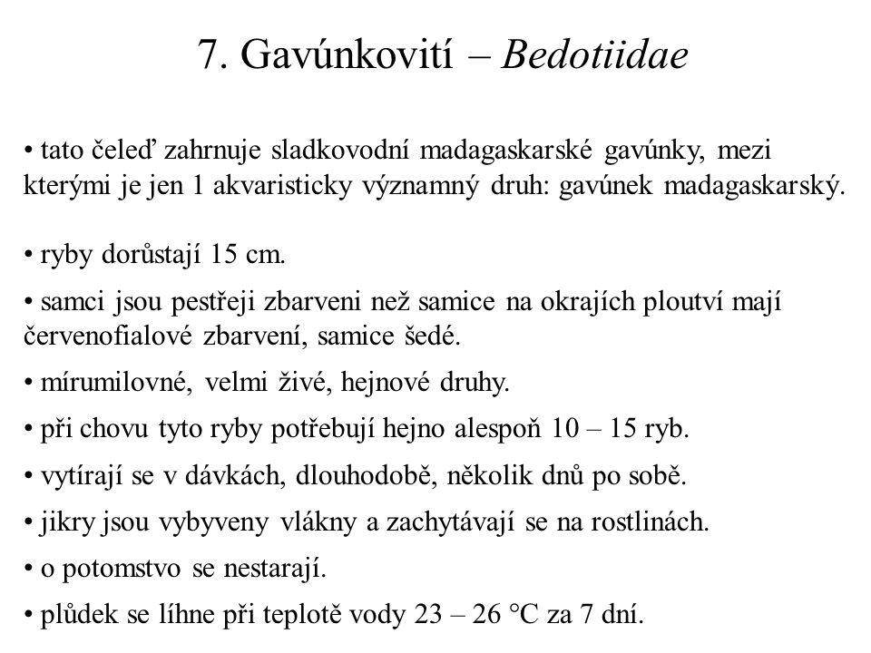 7. Gavúnkovití – Bedotiidae tato čeleď zahrnuje sladkovodní madagaskarské gavúnky, mezi kterými je jen 1 akvaristicky významný druh: gavúnek madagaska