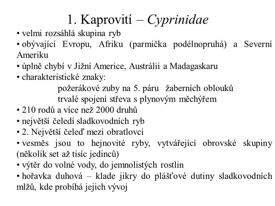 1. Kaprovití – Cyprinidae velmi rozsáhlá skupina ryb obývající Evropu, Afriku (parmička podélnopruhá) a Severní Ameriku úplně chybí v Jižní Americe, A