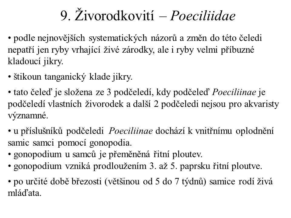9. Živorodkovití – Poeciliidae podle nejnovějších systematických názorů a změn do této čeledi nepatří jen ryby vrhající živé zárodky, ale i ryby velmi