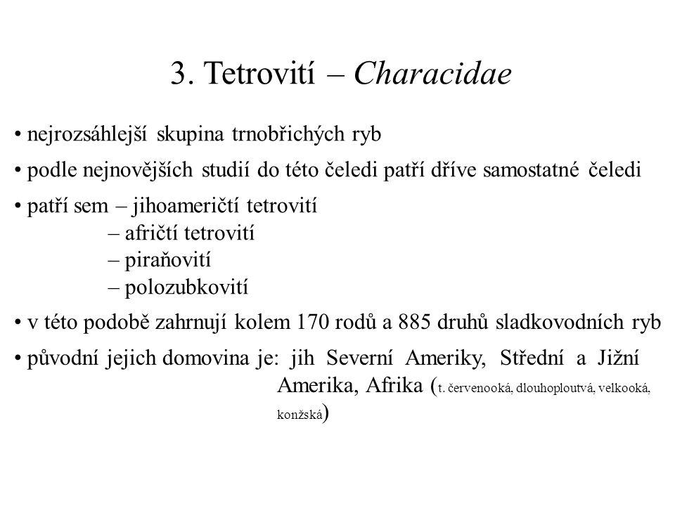 3. Tetrovití – Characidae nejrozsáhlejší skupina trnobřichých ryb podle nejnovějších studií do této čeledi patří dříve samostatné čeledi patří sem – j