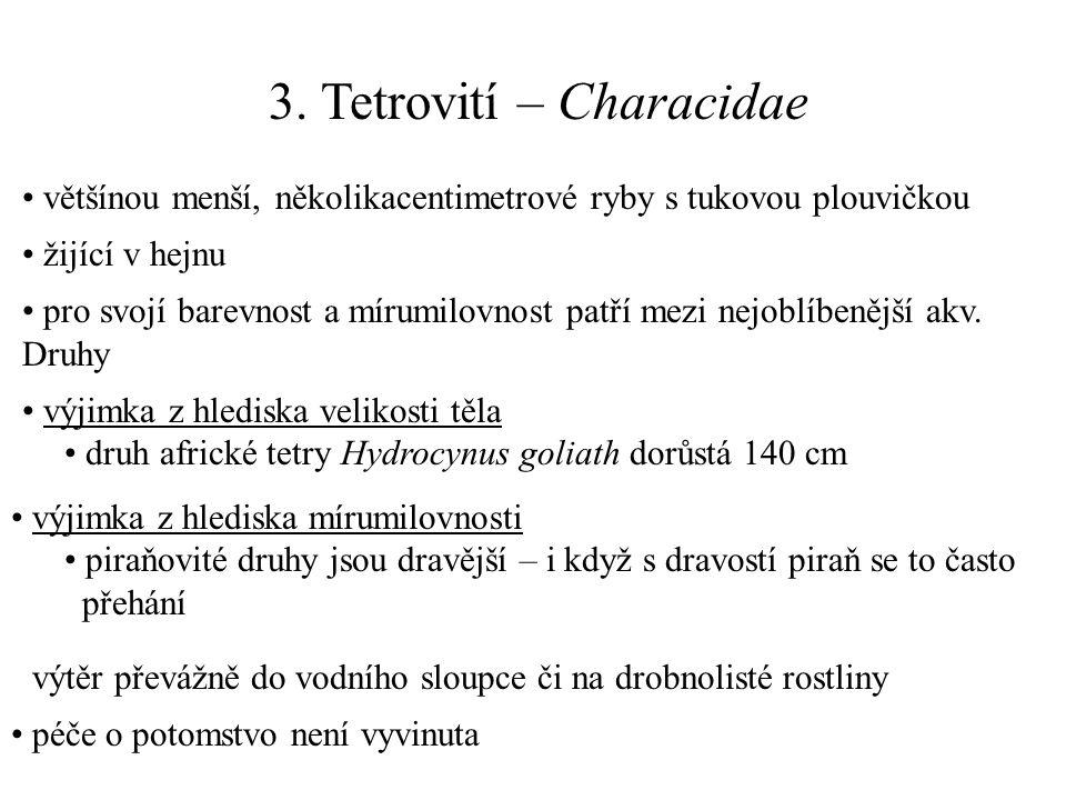 3. Tetrovití – Characidae většínou menší, několikacentimetrové ryby s tukovou plouvičkou žijící v hejnu pro svojí barevnost a mírumilovnost patří mezi