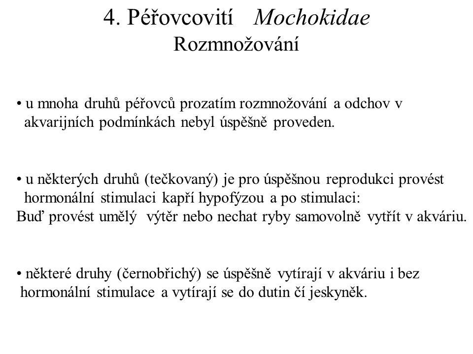 4. Péřovcovití Mochokidae Rozmnožování u mnoha druhů péřovců prozatím rozmnožování a odchov v akvarijních podmínkách nebyl úspěšně proveden. u některý