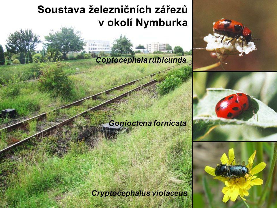 Soustava železničních zářezů v okolí Nymburka Coptocephala rubicunda Gonioctena fornicata Cryptocephalus violaceus