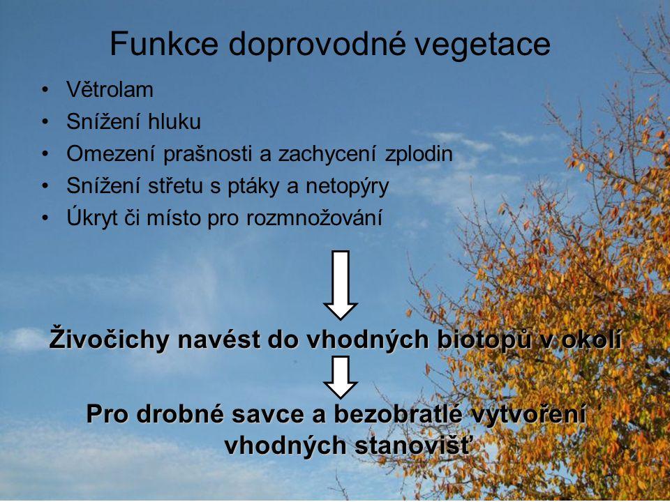 Funkce doprovodné vegetace Větrolam Snížení hluku Omezení prašnosti a zachycení zplodin Snížení střetu s ptáky a netopýry Úkryt či místo pro rozmnožov