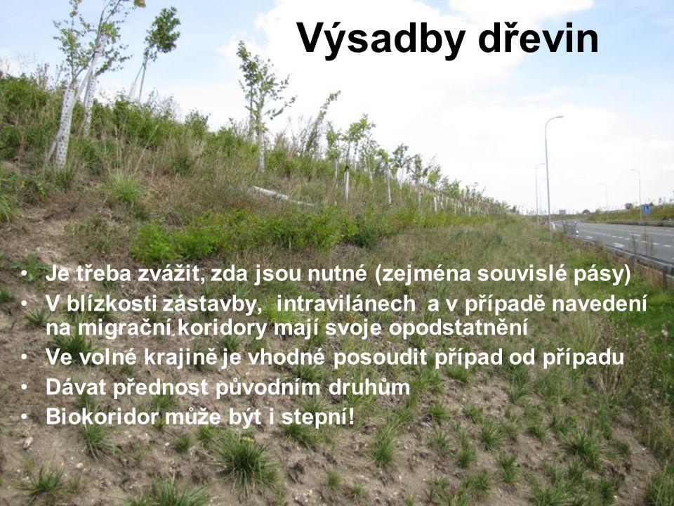 Výsadby dřevin Je třeba zvážit, zda jsou nutné (zejména souvislé pásy) V blízkosti zástavby, intravilánech a v případě navedení na migrační koridory m