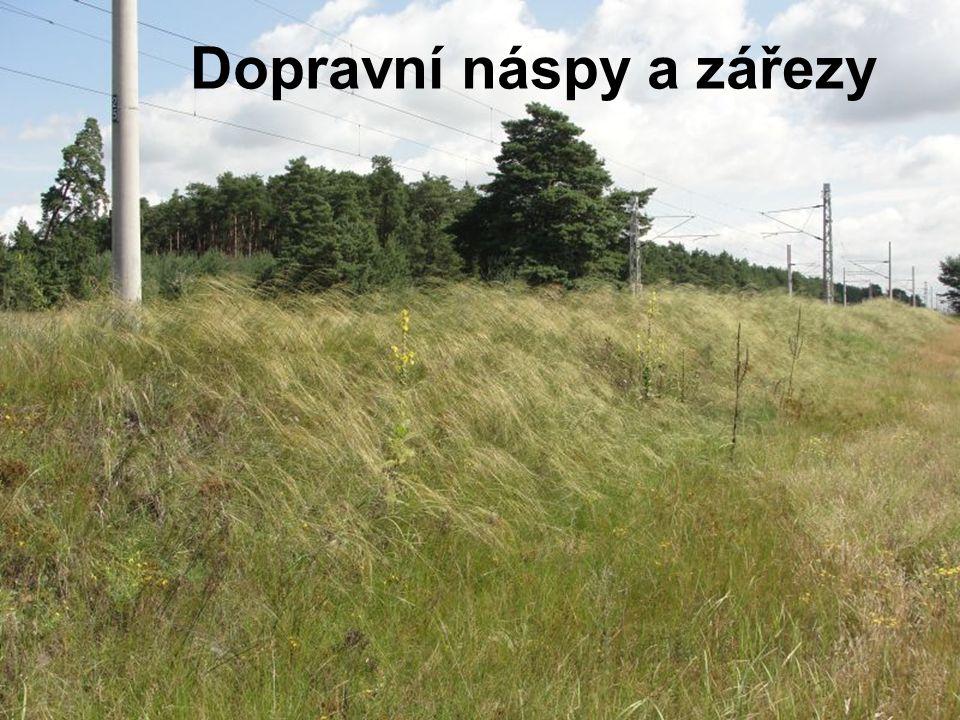 Zástupce Ředitelství silnic a dálnic ČR (90.