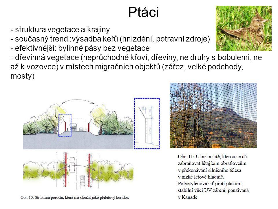 Ptáci - struktura vegetace a krajiny - současný trend :výsadba keřů (hnízdění, potravní zdroje) - efektivnější: bylinné pásy bez vegetace - dřevinná vegetace (neprůchodné křoví, dřeviny, ne druhy s bobulemi, ne až k vozovce) v místech migračních objektů (zářez, velké podchody, mosty)