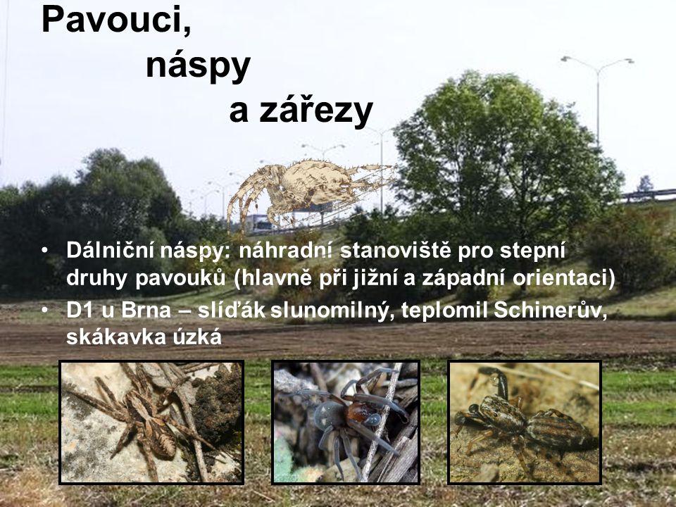 Dálniční náspy: náhradní stanoviště pro stepní druhy pavouků (hlavně při jižní a západní orientaci) D1 u Brna – slíďák slunomilný, teplomil Schinerův,