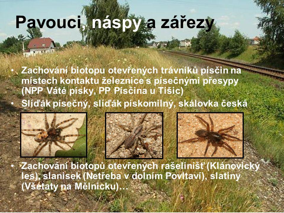 Pavouci, náspy a zářezy Zachování biotopu otevřených trávníků písčin na místech kontaktu železnice s písečnými přesypy (NPP Váté písky, PP Písčina u T