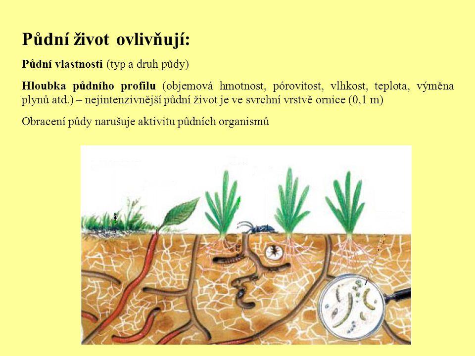 Půdní život ovlivňují: Půdní vlastnosti (typ a druh půdy) Hloubka půdního profilu (objemová hmotnost, pórovitost, vlhkost, teplota, výměna plynů atd.)