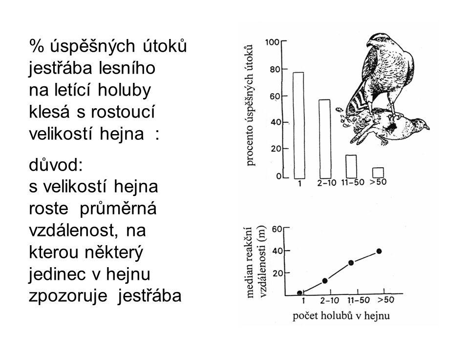 % úspěšných útoků jestřába lesního na letící holuby klesá s rostoucí velikostí hejna : důvod: s velikostí hejna roste průměrná vzdálenost, na kterou n