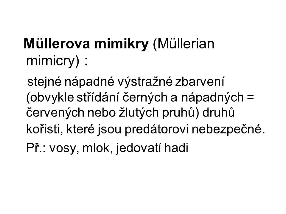 Müllerova mimikry (Müllerian mimicry) : stejné nápadné výstražné zbarvení (obvykle střídání černých a nápadných = červených nebo žlutých pruhů) druhů
