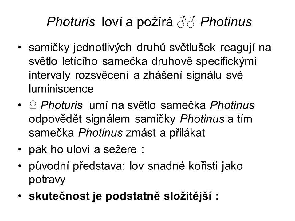 Photuris loví a požírá ♂♂ Photinus samičky jednotlivých druhů světlušek reagují na světlo letícího samečka druhově specifickými intervaly rozsvěcení a