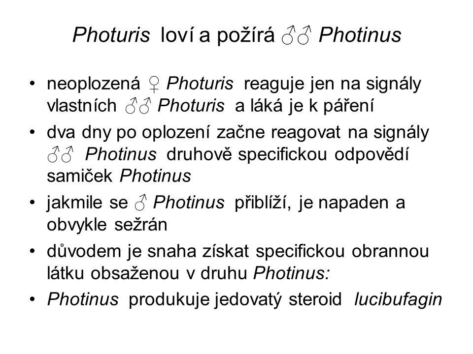 Photuris loví a požírá ♂♂ Photinus neoplozená ♀ Photuris reaguje jen na signály vlastních ♂♂ Photuris a láká je k páření dva dny po oplození začne rea