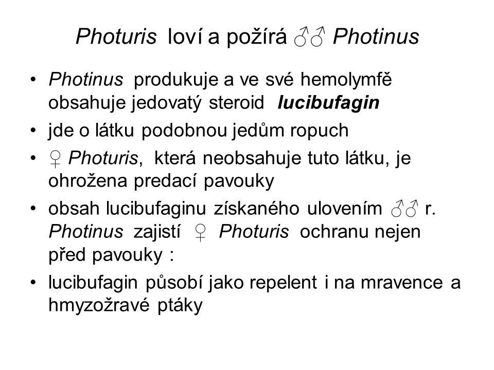 Photuris loví a požírá ♂♂ Photinus Photinus produkuje a ve své hemolymfě obsahuje jedovatý steroid lucibufagin jde o látku podobnou jedům ropuch ♀ Pho