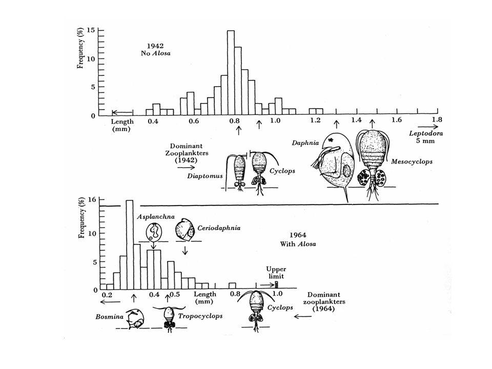 Selektivní role predace Brooks a Dodson (1965) na základě těchto pozorování formulovali size-efficiency hypothesis : když je predace planktonofágními rybami slabá, drobné druhy herbivorního zooplanktonu jsou kompetičně eliminovány velkými druhy, které jsou efektivnějšími filtrátory → malá hustota fytoplanktonu když je intensita predace planktonofágními rybami vysoká, ryby eliminují větší herbivorní planktonty a tím umožní dominanci drobných druhů → velká hustota fytoplanktonu