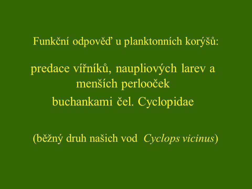 Funkční odpověď u planktonních korýšů: predace vířníků, naupliových larev a menších perlooček buchankami čel.