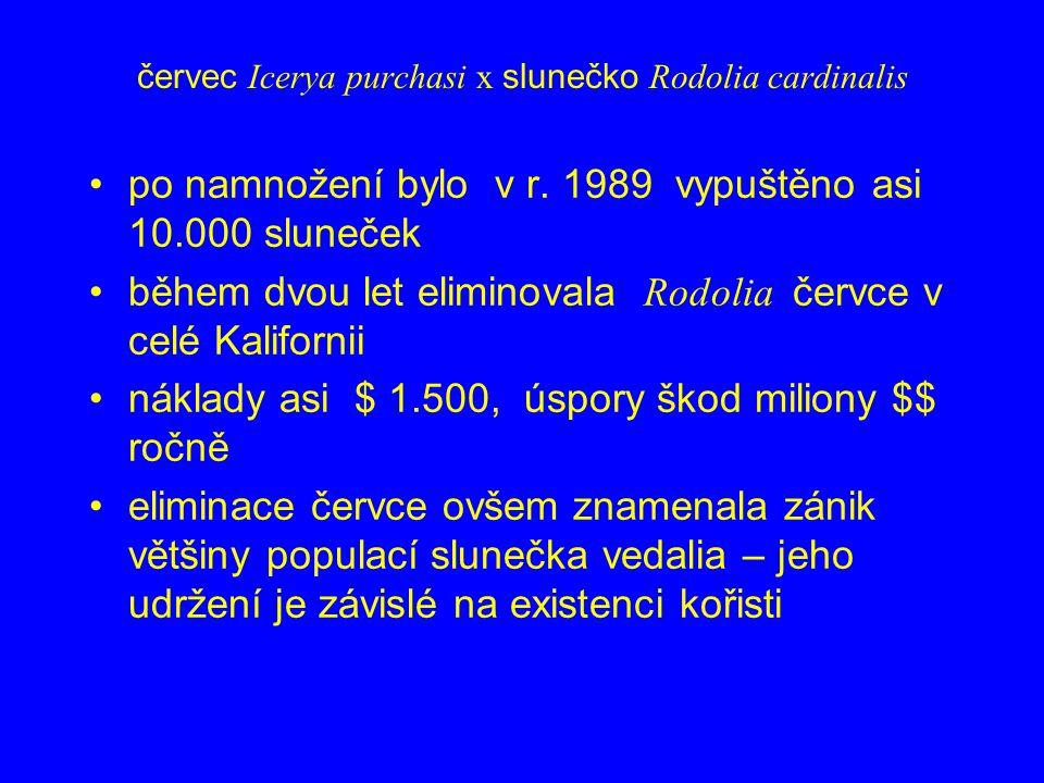 červec Icerya purchasi x slunečko Rodolia cardinalis po namnožení bylo v r. 1989 vypuštěno asi 10.000 sluneček během dvou let eliminovala Rodolia červ