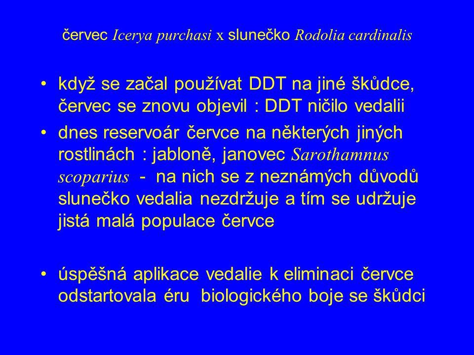červec Icerya purchasi x slunečko Rodolia cardinalis když se začal používat DDT na jiné škůdce, červec se znovu objevil : DDT ničilo vedalii dnes rese