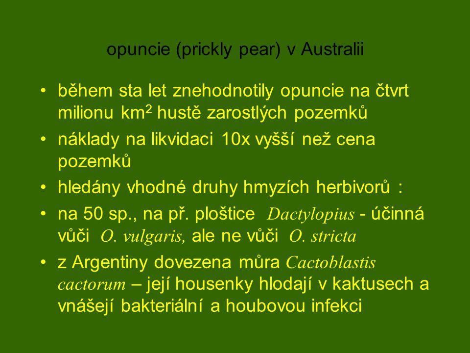 opuncie (prickly pear) v Australii během sta let znehodnotily opuncie na čtvrt milionu km 2 hustě zarostlých pozemků náklady na likvidaci 10x vyšší než cena pozemků hledány vhodné druhy hmyzích herbivorů : na 50 sp., na př.