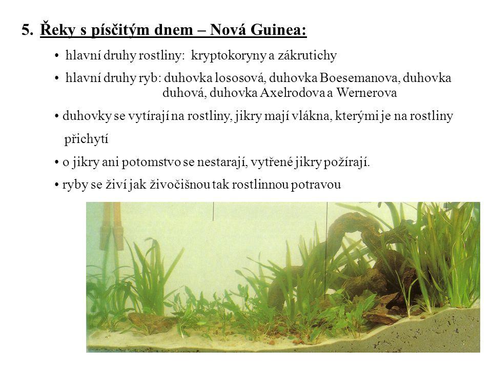 5.Řeky s písčitým dnem – Nová Guinea: hlavní druhy rostliny: kryptokoryny a zákrutichy hlavní druhy ryb: duhovka lososová, duhovka Boesemanova, duhovk