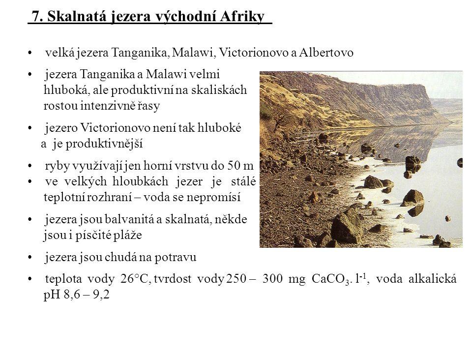 7. Skalnatá jezera východní Afriky velká jezera Tanganika, Malawi, Victorionovo a Albertovo jezera Tanganika a Malawi velmi hluboká, ale produktivní n