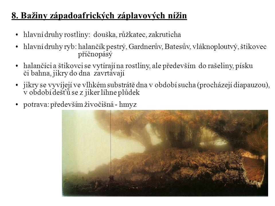 8. Bažiny západoafrických záplavových nížin hlavní druhy rostliny: douška, růžkatec, zakruticha hlavní druhy ryb: halančík pestrý, Gardnerův, Batesův,