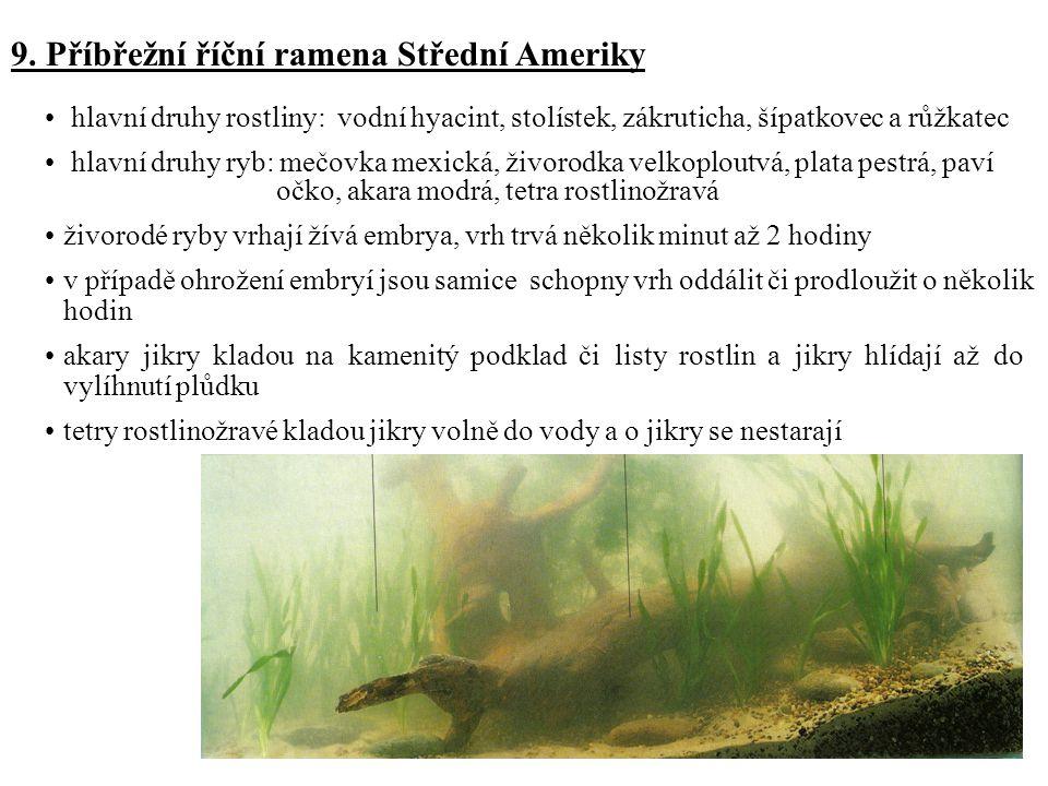9. Příbřežní říční ramena Střední Ameriky hlavní druhy rostliny: vodní hyacint, stolístek, zákruticha, šípatkovec a růžkatec hlavní druhy ryb: mečovka