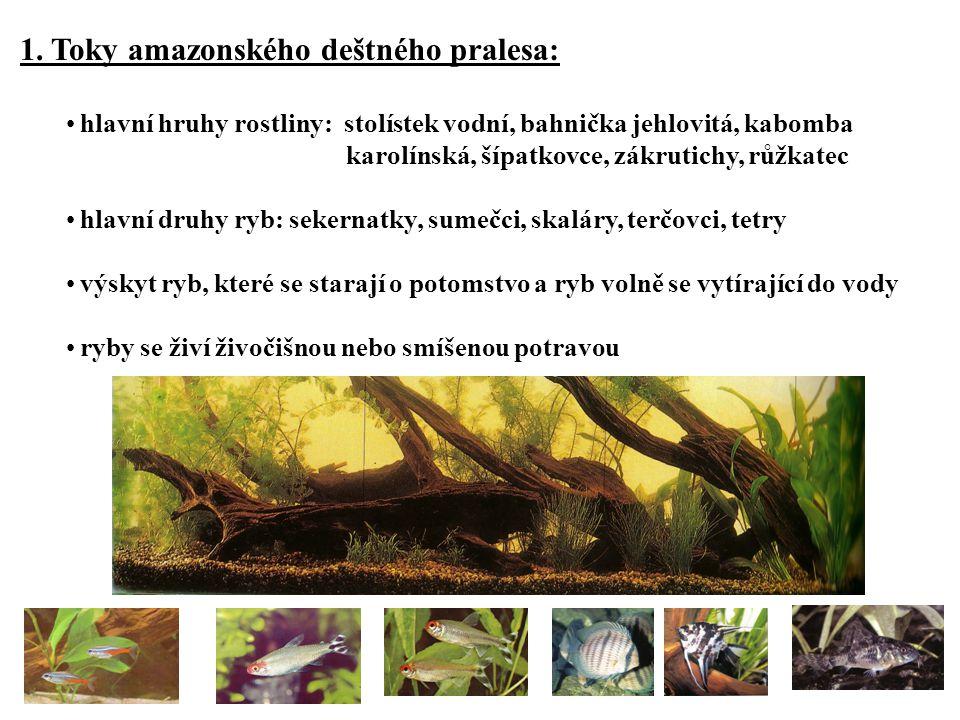 1. Toky amazonského deštného pralesa: hlavní hruhy rostliny: stolístek vodní, bahnička jehlovitá, kabomba karolínská, šípatkovce, zákrutichy, růžkatec