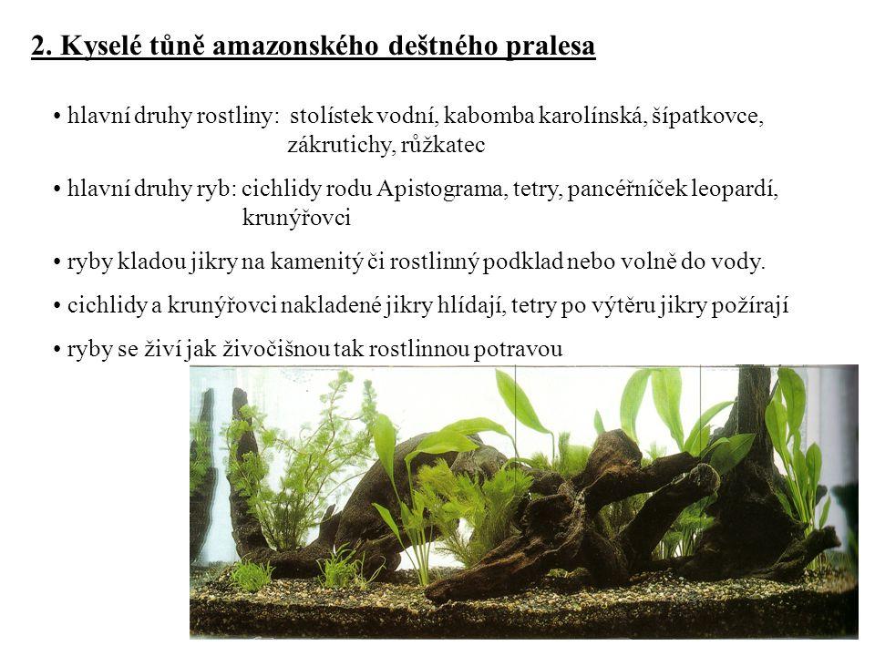 2. Kyselé tůně amazonského deštného pralesa hlavní druhy rostliny: stolístek vodní, kabomba karolínská, šípatkovce, zákrutichy, růžkatec hlavní druhy