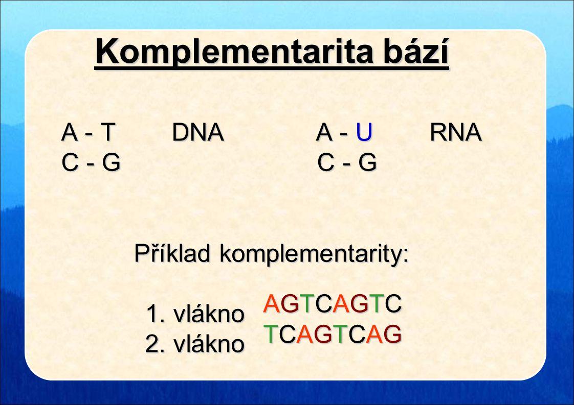 Komplementarita bází A - T DNA A - U RNA A - T DNA A - U RNA C - G C - G C - G C - G Příklad komplementarity: 1. vlákno 1. vlákno 2. vlákno 2. vlákno