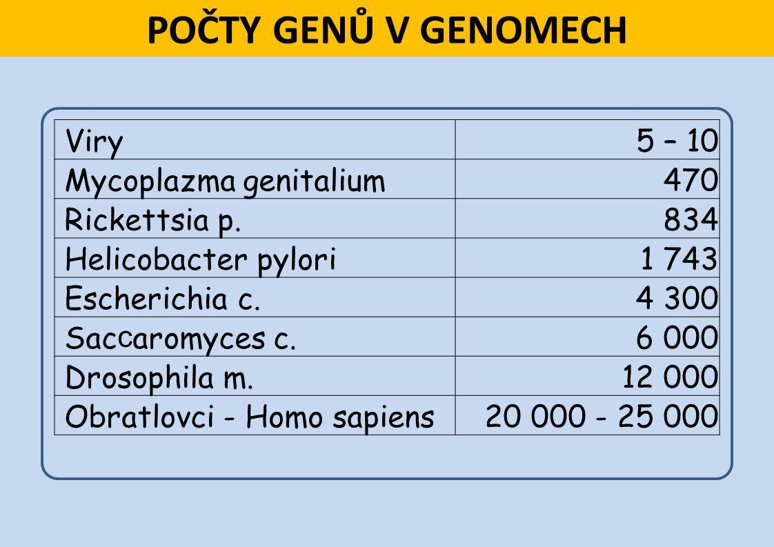 POČTY GENŮ V GENOMECH Viry5 – 10 Mycoplazma genitalium470 Rickettsia p.834 Helicobacter pylori1 743 Escherichia c.4 300 Sac c aromyces c.6 000 Drosoph