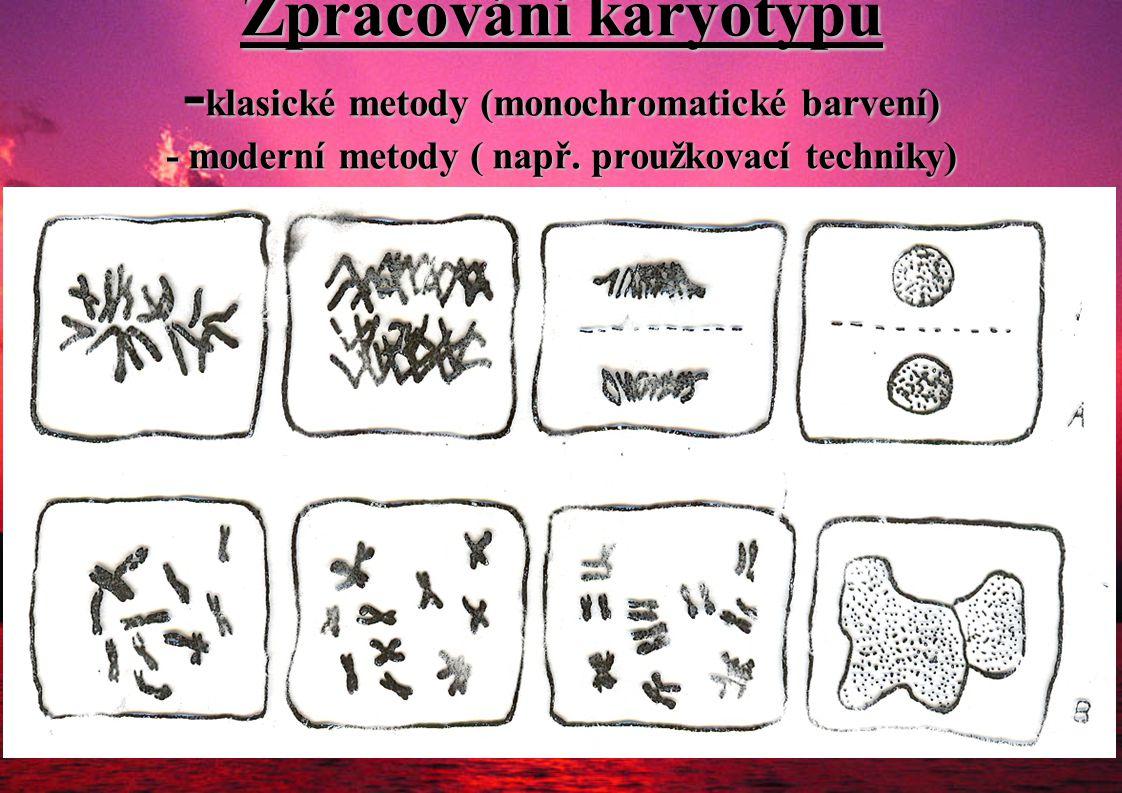 Zpracování karyotypu - klasické metody (monochromatické barvení) - moderní metody ( např. proužkovací techniky)