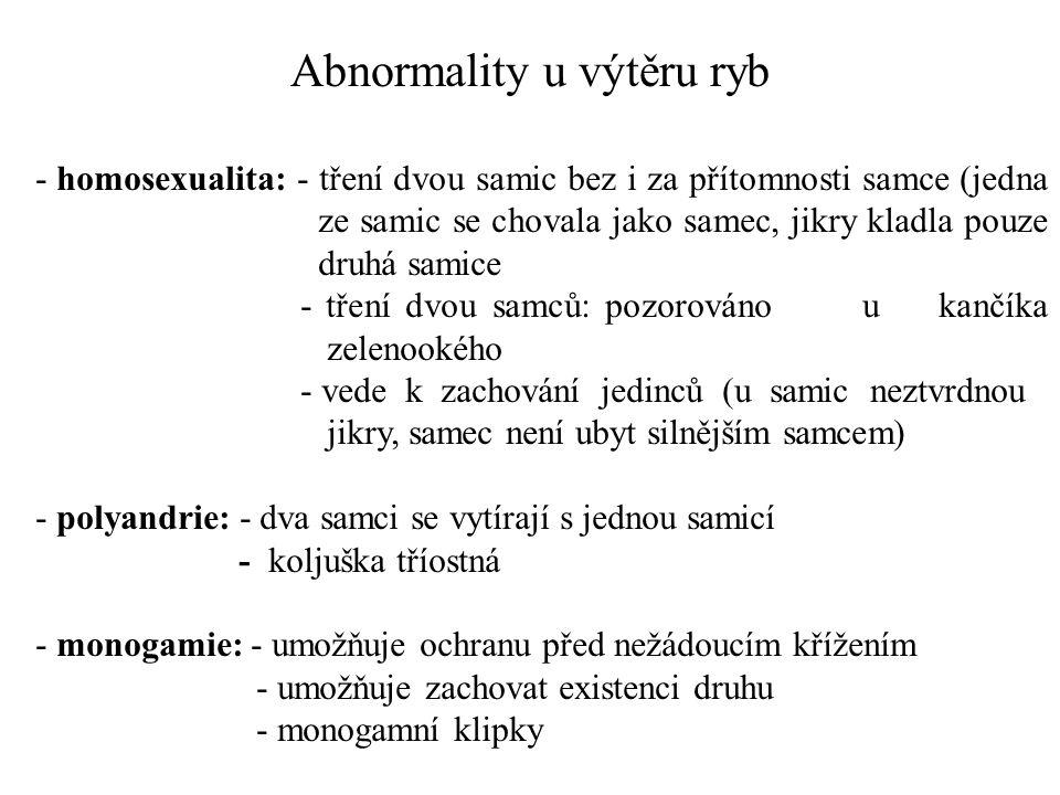 - homosexualita: - tření dvou samic bez i za přítomnosti samce (jedna ze samic se chovala jako samec, jikry kladla pouze druhá samice - tření dvou sam